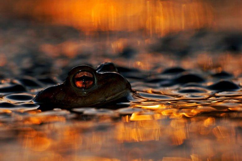 Среда обитания разных животных на красивых фотографиях