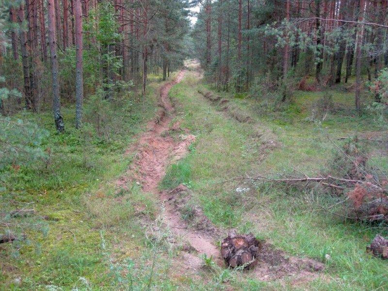 Лесовозная дорога