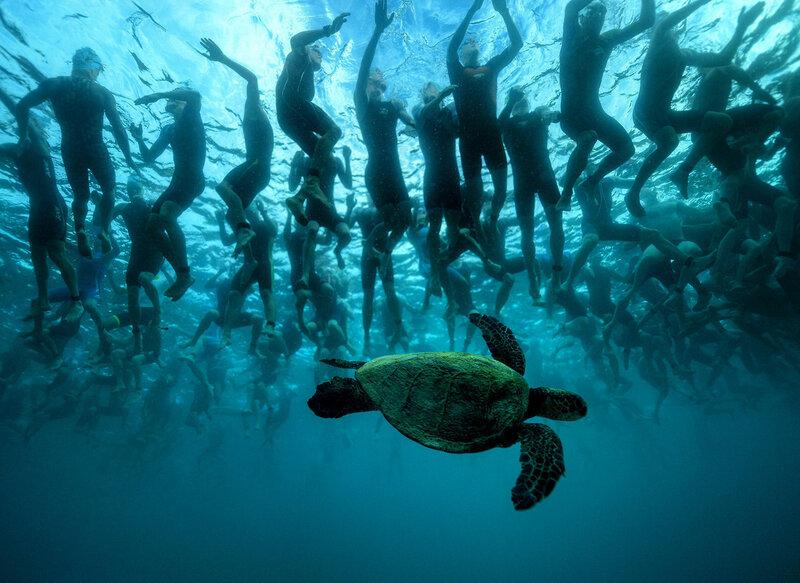 Зеленая морская черепаха, также известная как Хону, на Гавайях считается символом удачи и долголетия. Эта черепаха решила принести удачу 2300 участникам чемпионата мира по триатлону Ironman на Каилуа-Кона, Гавайи, ожидающим старта 8 октября 2016 года. (Donald Miralle / IRONMAN via Getty)