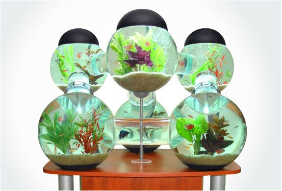 Эволюция рыбьего жилья. Необычные аквариумы (фото)