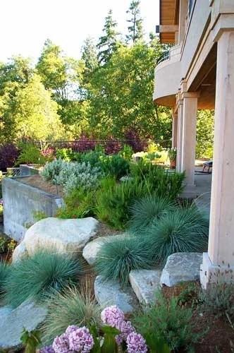 японский сад дизайн