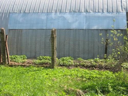 Ограда из колючей проволоки