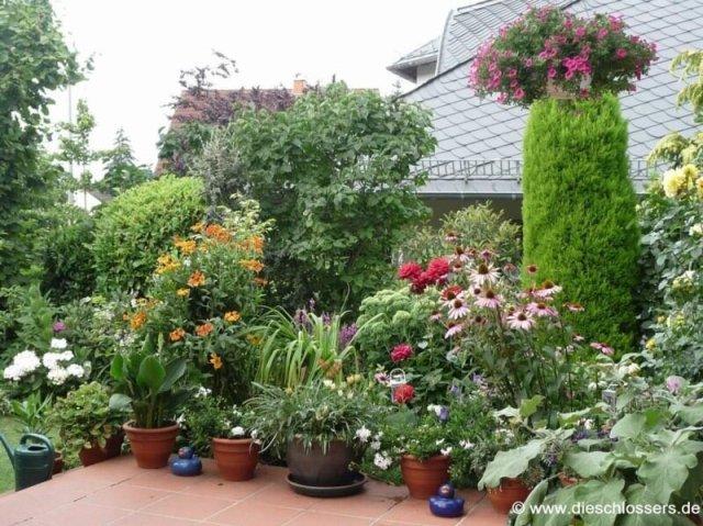 растения для террасы благоустройство дизайн террасы и балкона