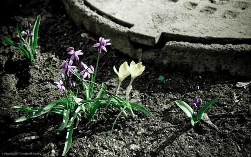 весна, натюрморт, фотография, цветы, художественная фотография