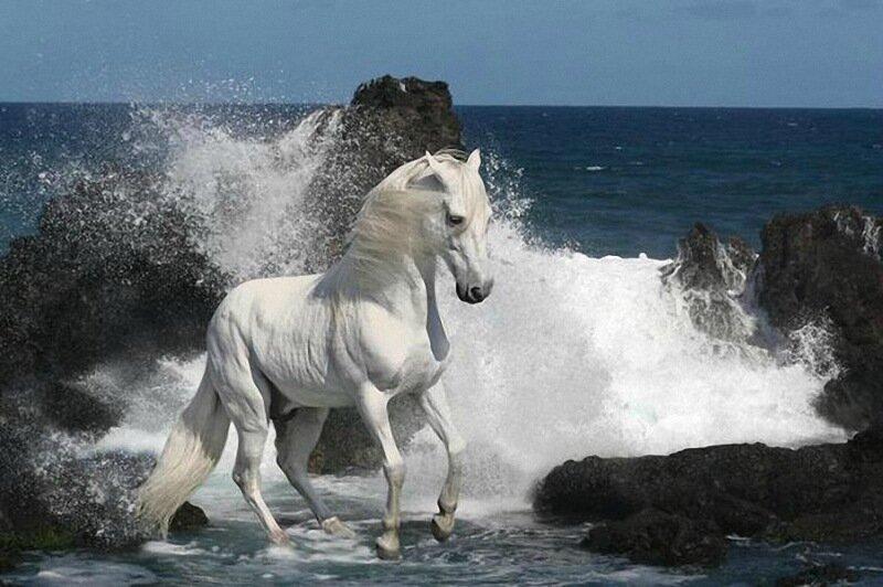 Удивительные случаи, когда лошади и другие животные спасали людям жизнь