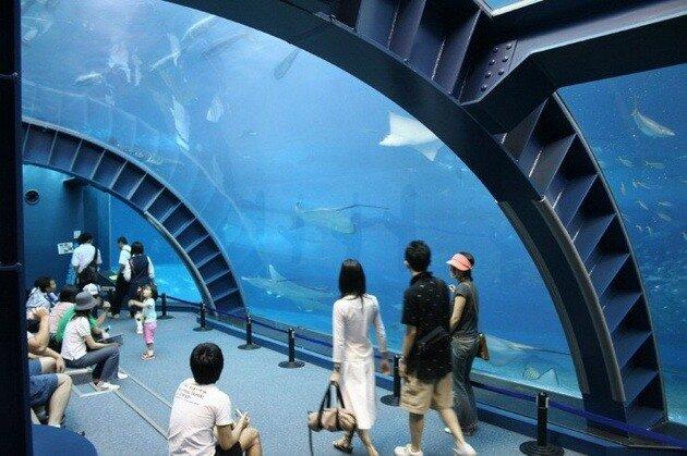 Океанариум «Окинава Тюрауми» (Okinawa Churaumi Aquarium). Япония