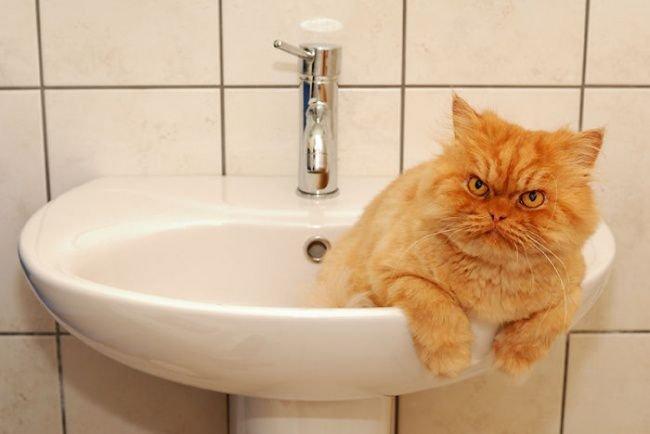 Фотографии самого сердитого кота в мире побили популярность Майкла Джексона