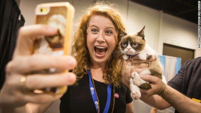 Как популярная «сердитая кошка» заработала своим хозяевам почти 100 млн долларов