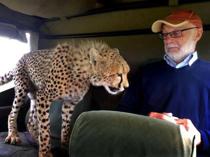 Что делать, если к вам в машину запрыгнул дикий гепард