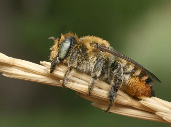 Как спят пчелы: удивительные фотографии мира живой природы
