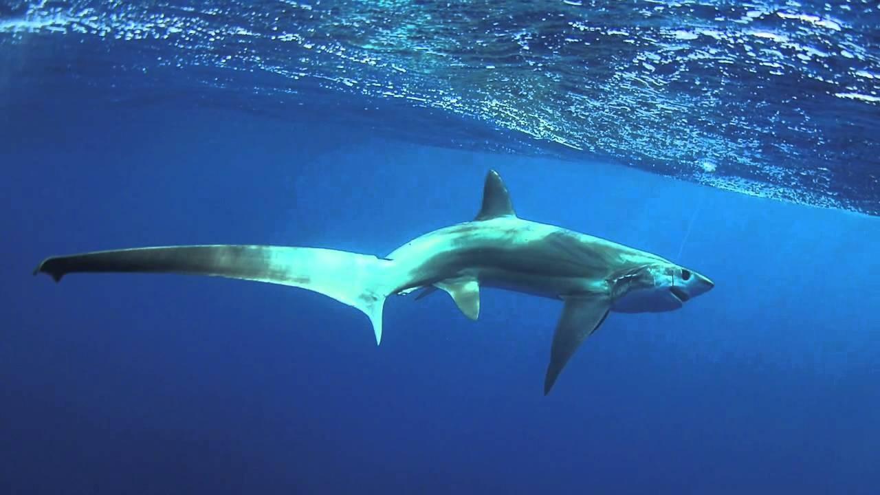 Картинки самых необычных акул