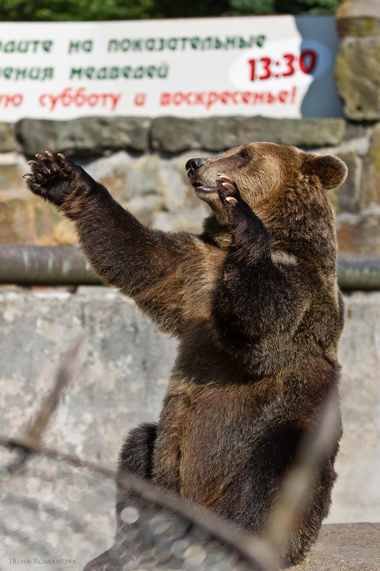 медведи 29 л.jpg