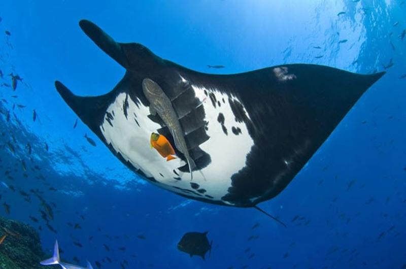 Подводный мир Стива Блума (фотографии)