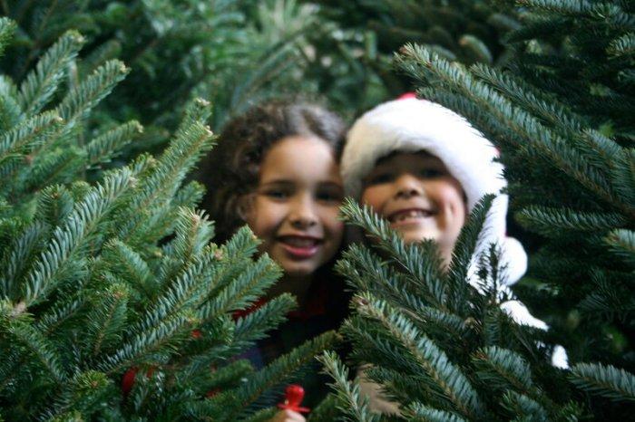 Британские ученые вывели формулу, как выбрать идеальную новогоднюю елку