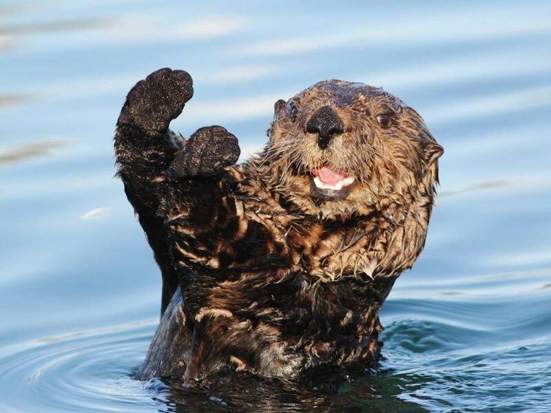 Самые симпатичные животные в мире: забавные фотографии