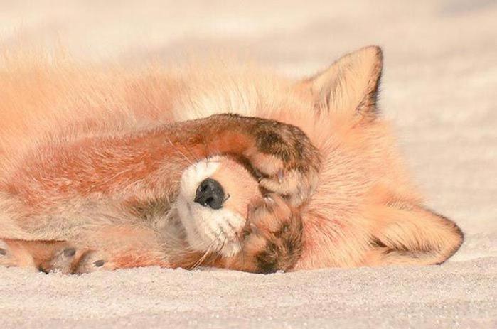 Сказочный японский остров Хоккайдо с удивительно милыми животными