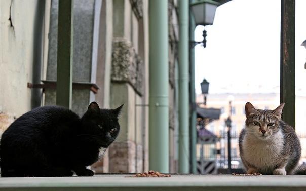 Коты Эрмитажа - хранители национальных сокровищ