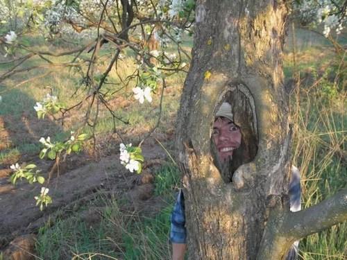 Как скрепить расщепленные ветви садового дерева