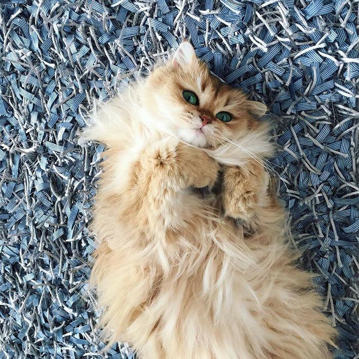 Фотографии неотразимого кота Смузи