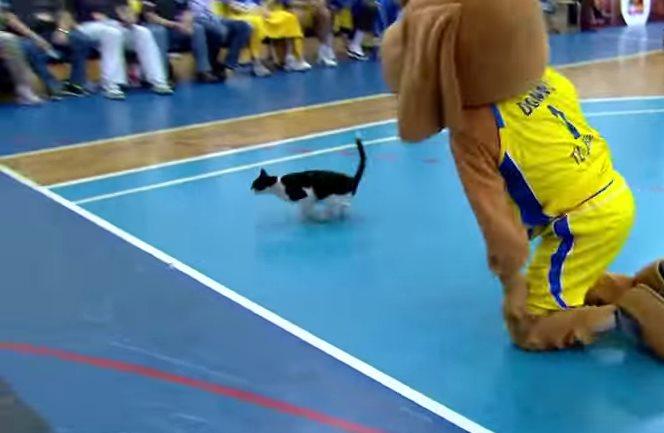 Как кот на баскетбольной площадке удирал от человека собаки