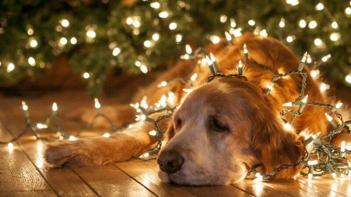 Какими бывают новогодние гирлянды?