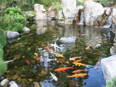 Большой пруд с рыбами