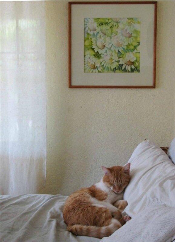 Баю бай, должны все кисы ночью спать: фотографии забавно спящих кошек!