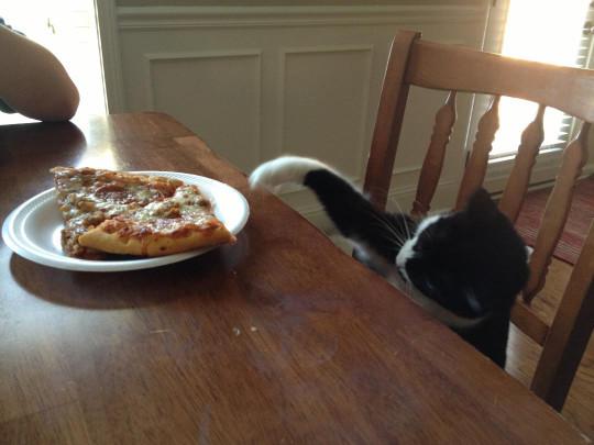 40 животных, которые любят пиццу больше жизни