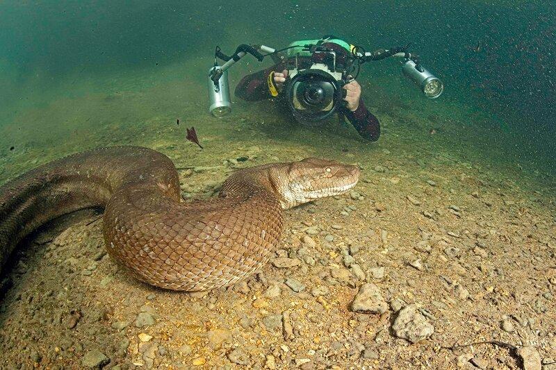 Топ 10: Самые опасные змеи в мире