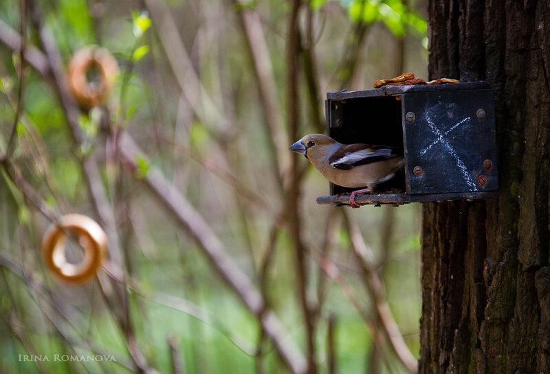 птицы ботансада 10 л.jpg