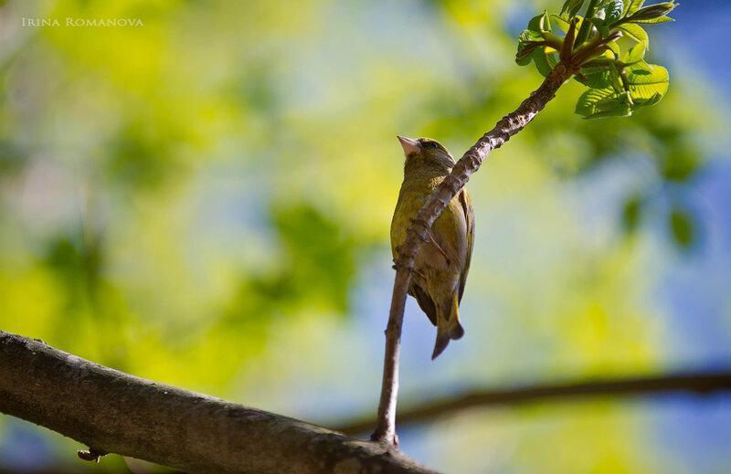 птицы ботансада 23 л.jpg