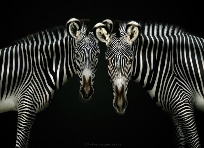 Педро Харке Кребс: очень красивые фотографии диких животных