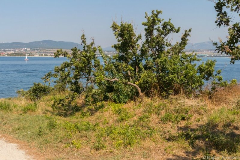 Кустарник на берегу, Черное море, Геленджик