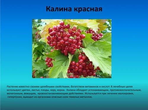 Лекарственные и съедобные растения