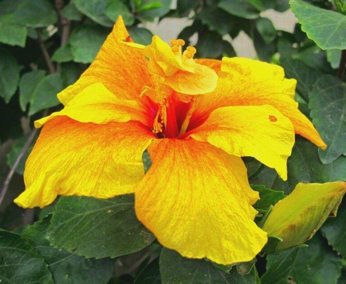 Желто-оранжевый