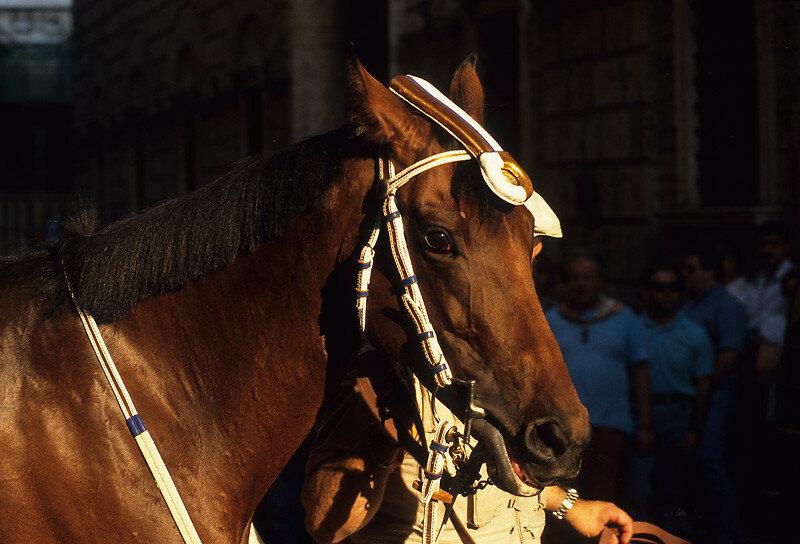 Церемония благословения лошади в церкви перед скачками Палио