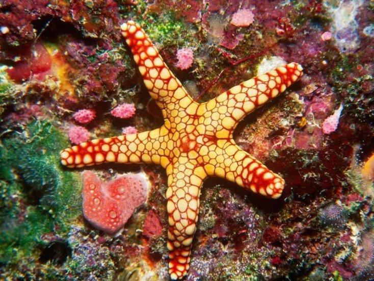 Удивительная красота Большого барьерного рифа в Австралии
