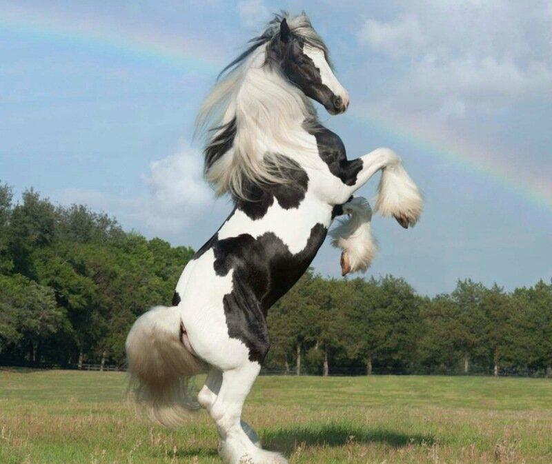 Почему мы любим и даже обожаем лошадей: красивые фотографии