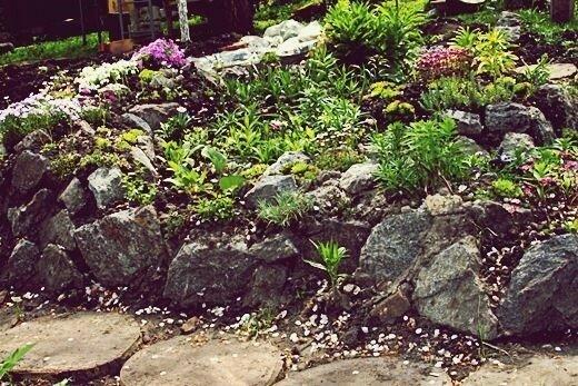 Альпинарий (каменистая композиция) на дачном участке