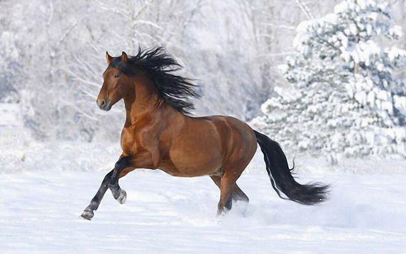 Самые интересные факты о лошадях
