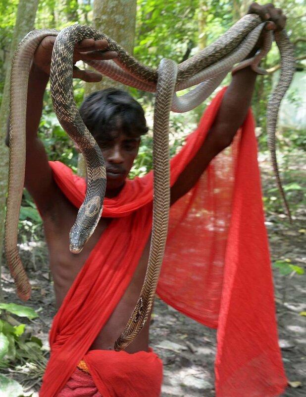Удивительные ритуалы заклинателей ядовитых змей в Индии