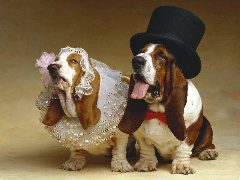 Звери в свадебных платьях и костюмах