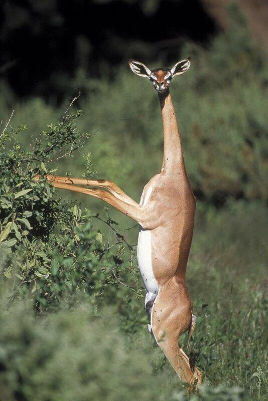 Редкие, удивительные, экзотические животные. Топ-25
