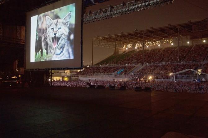 Фестиваль кошачьего видео / Internet Cat Video Festival. Лондондерри, Ирландия