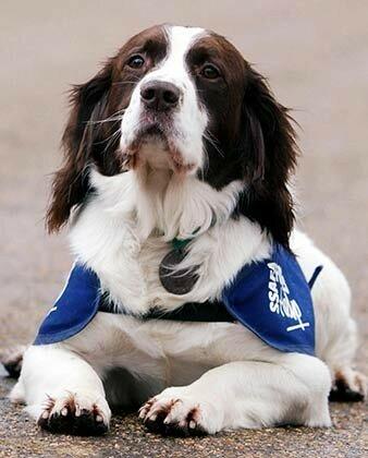 О погибшем в Париже псе Дизеле и других собаках на службе у антитеррора