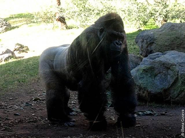Биопарк в Валенсии— самый большой в Европе. Там есть фламинго, жирафы, слоны, носороги и другие животные