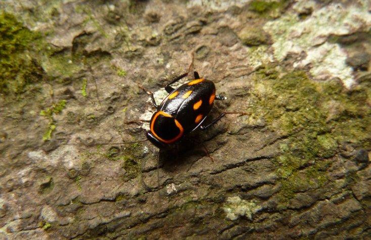Как кусаются тараканы: сила укуса «переключается» с помощью разных мышц челюсти