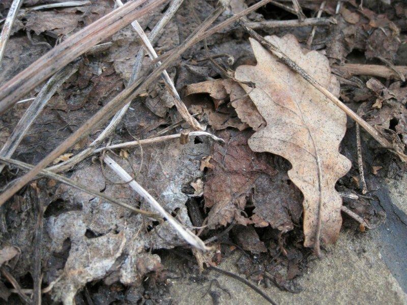 Прошлогодние листья