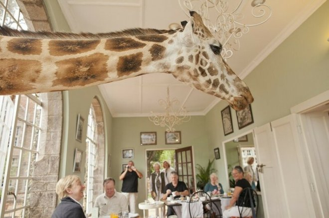 Giraffe Mano: Завтрак с жирафами в Кении