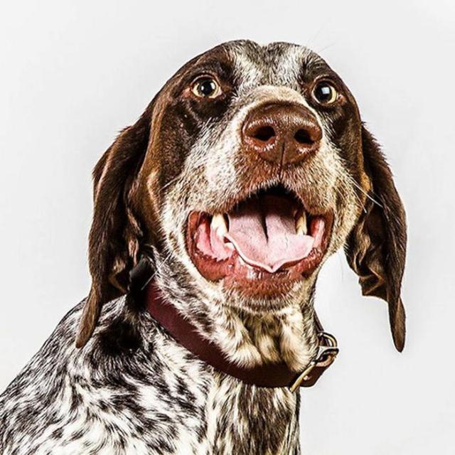 Барбара ОБрайен и морды собак